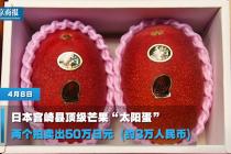 """日本宫崎县""""太阳蛋""""芒果 两个拍出3万元"""