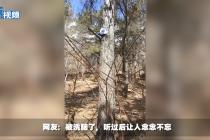 """东北味""""魔性消防宣扬语""""走红网络"""