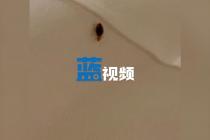 北京古北水镇大堆栈疑现床虱 卫生状况频被质疑