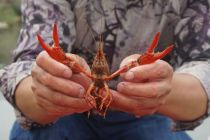 地区探秘|小龙虾的供应链谜题