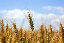 农户可线上投保 北京农业保险承保电子化试点启动
