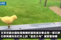 世园会里金色小鸟被掰断 百余只金鸟仅剩17只