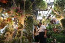 打造数十家顶级花店  北京花乡花卉市场升级艺术中心