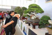 10分pk10娱乐_交流群_计划|世园会盆景国际竞赛评出75个金奖作品