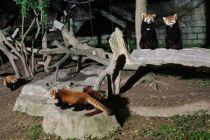 """""""夜經濟""""擴容 動物園開夜場"""