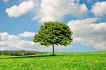 中央生态环保督察组 公布第二轮首批督察典型案例