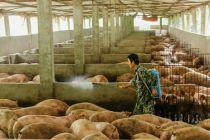 生猪业将构建高质量新格局