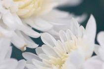 长假最后一天逢重阳!北京公园里十项活动游园赏菊