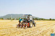 未受疫情影响 怀柔桥梓镇小麦增产