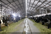 乳企竞购辉山乳业背后:负债与上游资产的选择题