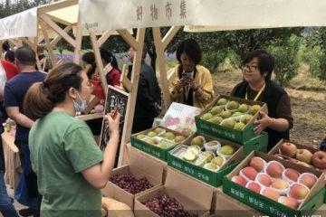 平谷2020年中国农民丰收节开幕 将推系列农事体验活动