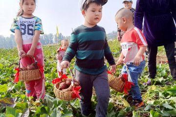 平谷夏各庄镇第二届红薯文化节开幕 特别设置农事体验区