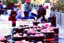 下马岭的苹果红了 门头沟文创协会搭建新渠道助销售
