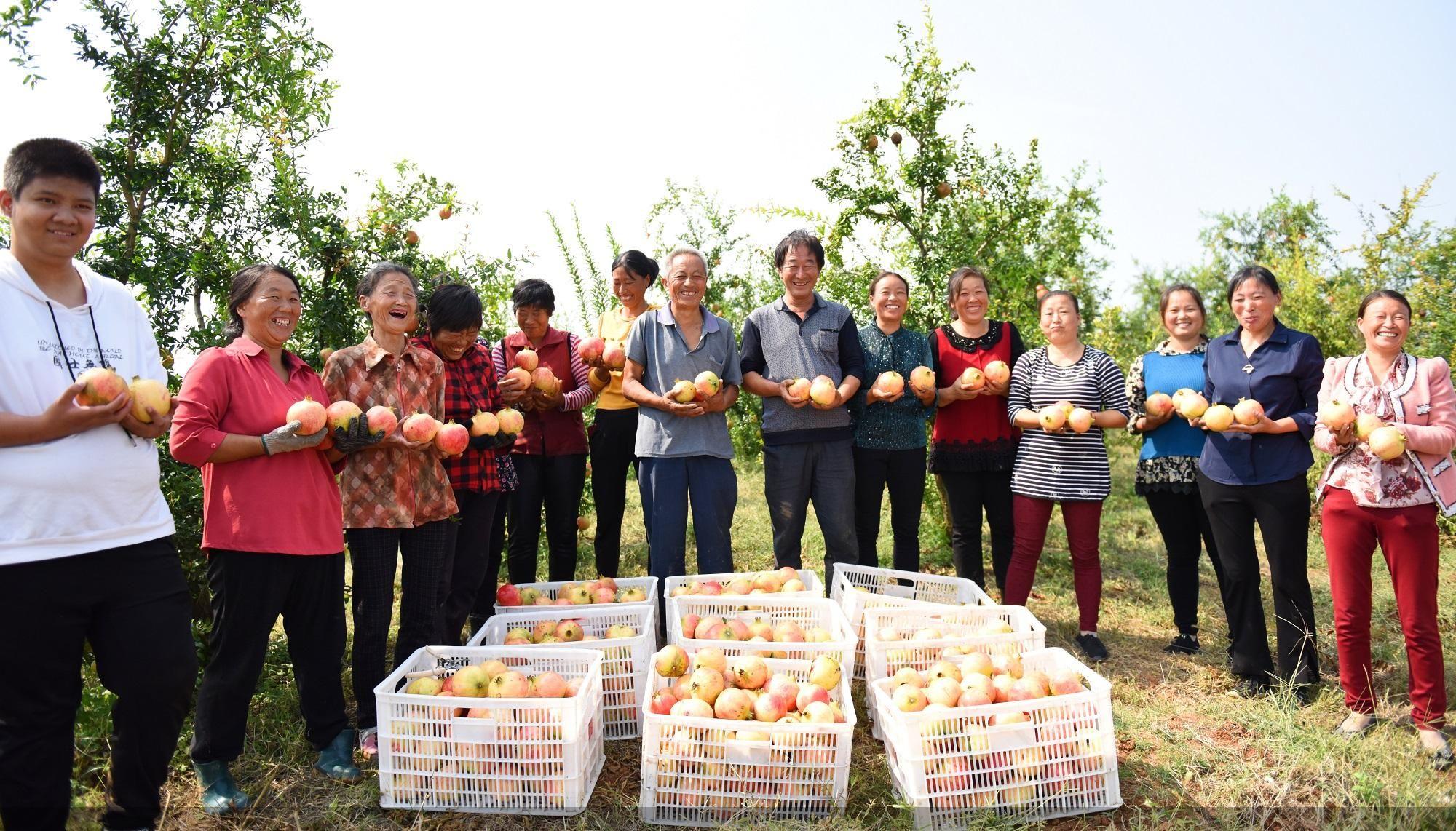 淅川县丹亚湖软籽石榴种植基地,果农们享受丰收的喜悦。中共淅川县委宣传部供图