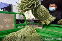 北京新发地假期期间蔬菜供应货足价稳