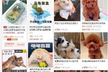宠物盲盒屡禁不止 部分商家仍称可发中通