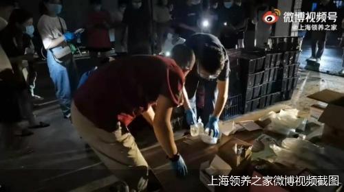 上海领养之家微博视频截图